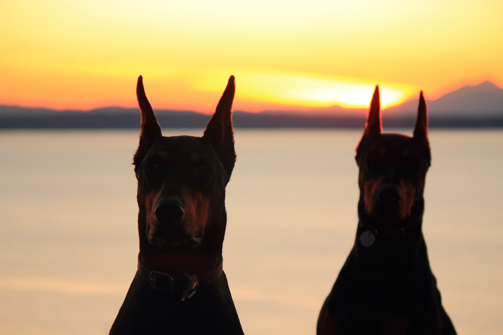 Name:  Dogs sunset.JPG Views: 509 Size:  335.8 KB