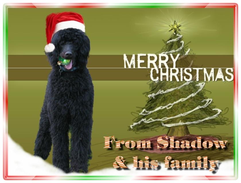 Name:  shadow-christmas-card-3.jpg Views: 1522 Size:  291.5 KB